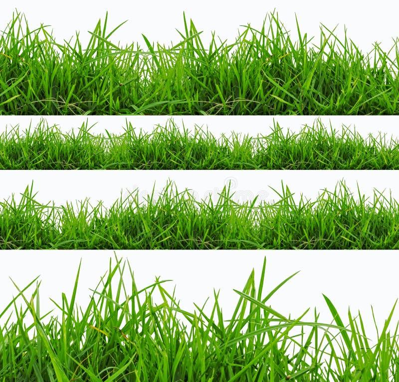 Het verse panorama van het de lente groene die gras op witte achtergrond wordt geïsoleerd. royalty-vrije stock fotografie