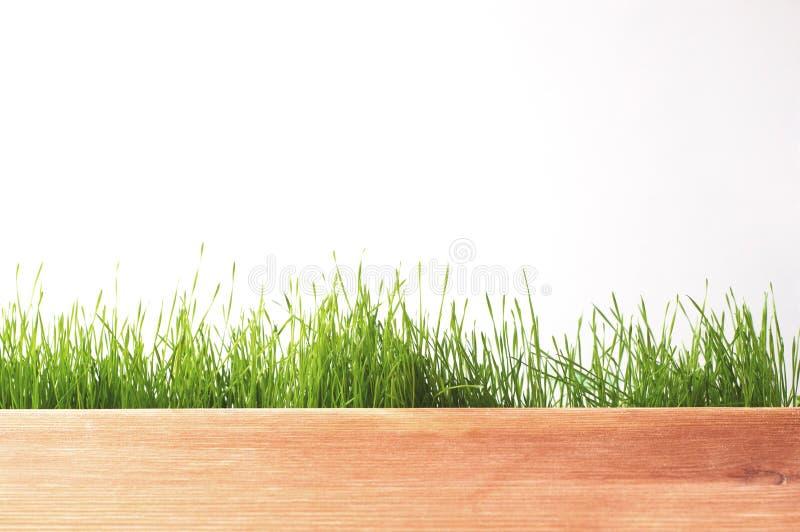Het verse panorama van het de lente groene die gras op witte achtergrond wordt geïsoleerd royalty-vrije stock fotografie
