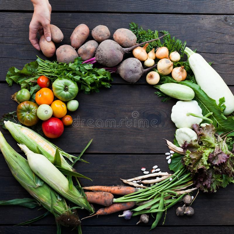 Het verse vegetarische voedsel van de de herfsttuin, organisch landbouwbedrijfconcept stock afbeelding