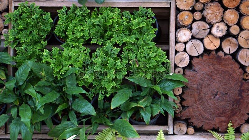 Het verticale groene en houten ontwerp van het tuinlandschap stock afbeelding