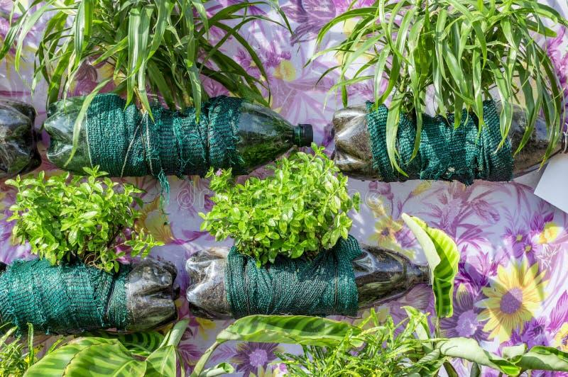 Het verticale tuinieren met pop flessen royalty-vrije stock fotografie