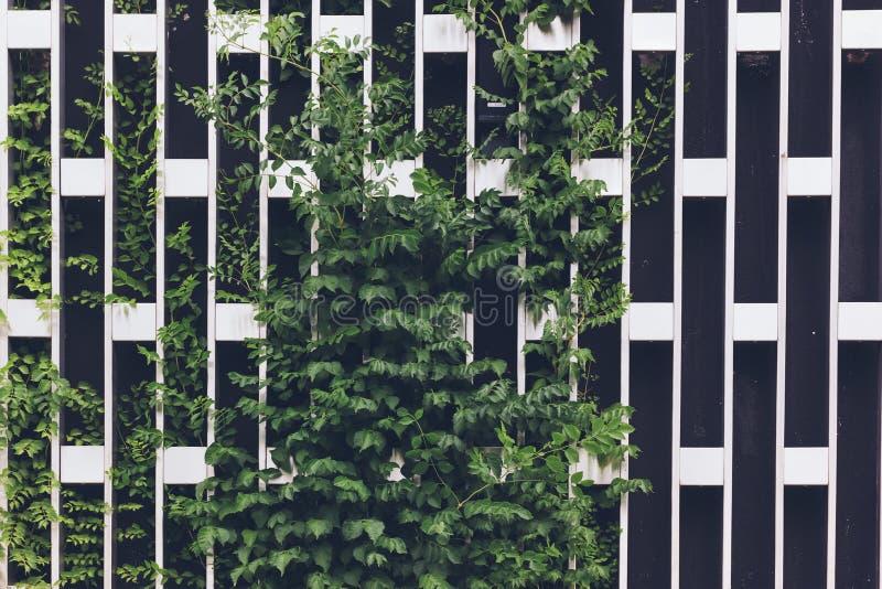 Het verticale tuinieren op een net van het metaalchroom stock foto