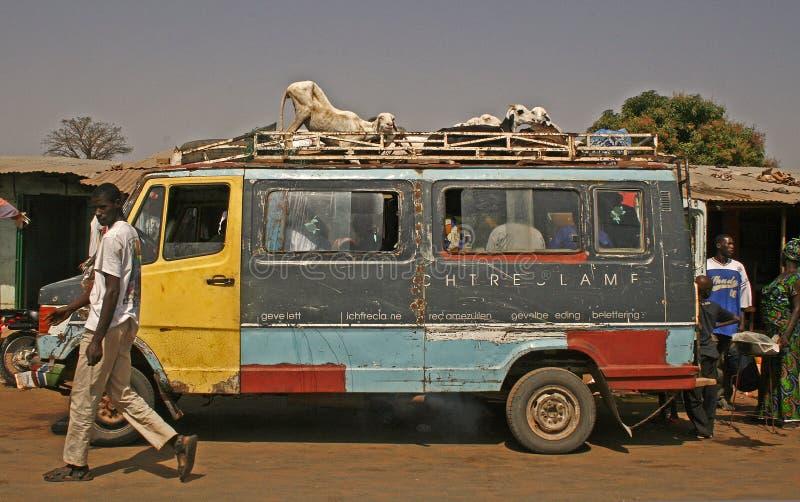 Het vervoer van het vee in Gambia, Afrika royalty-vrije stock afbeelding