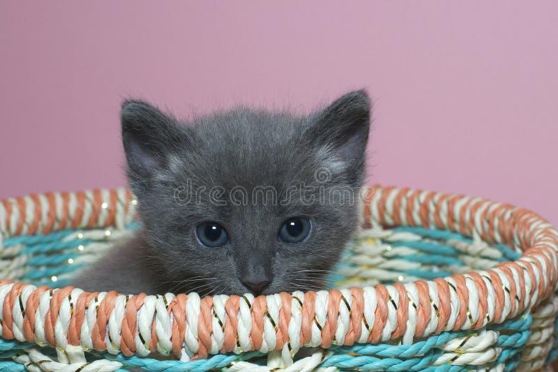 Het verwarde pluizige grijze het katje van de 4 week oude gestreepte kat een hoogtepunt bereiken over de bovenkant van mand royalty-vrije stock fotografie