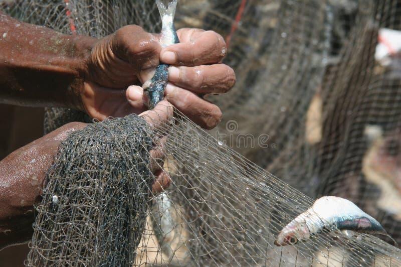 Het verwijderen van vissen royalty-vrije stock afbeelding