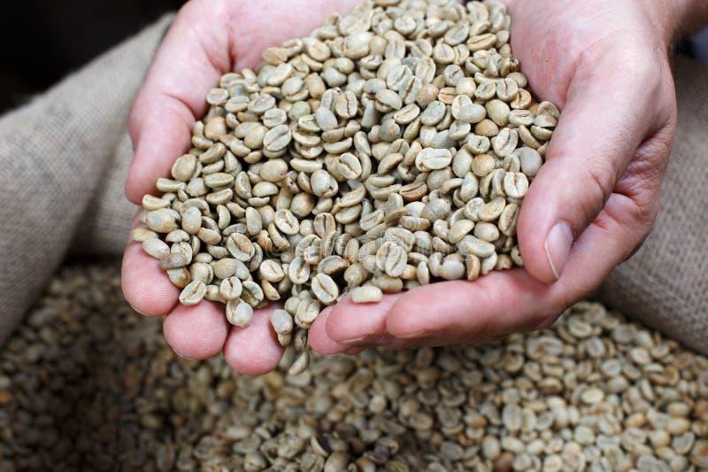 Het verwijderen van Witte Koffiebonen royalty-vrije stock foto's