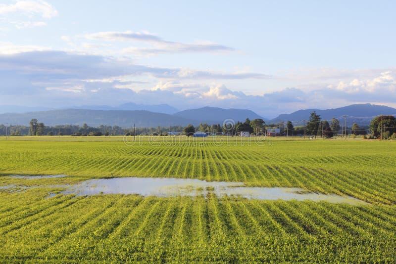 Het verzadigde Gebied van de Landbouwer stock foto