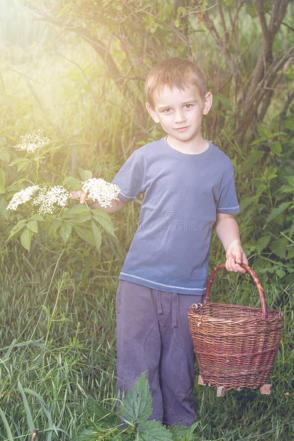Het verzamelen van oudere bloesembloem stock foto