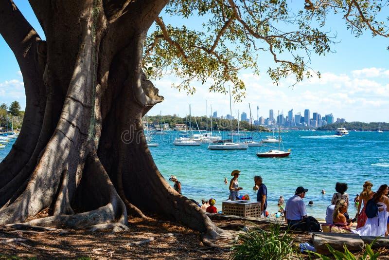 Het verzamelen zich van mensen onder een grote schaduwrijke boom bij het strand in de Baai van Watson ` s, met de horizon van Syd royalty-vrije stock foto