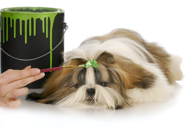 Het verzorgen van de hond stock foto's