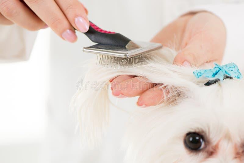 Het verzorgen van de hond royalty-vrije stock afbeelding