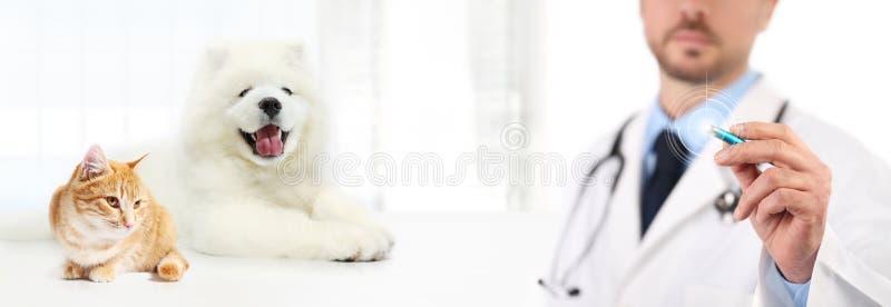 Het veterinaire scherm van de artsenaanraking met penhond en kat op witte bac stock foto's