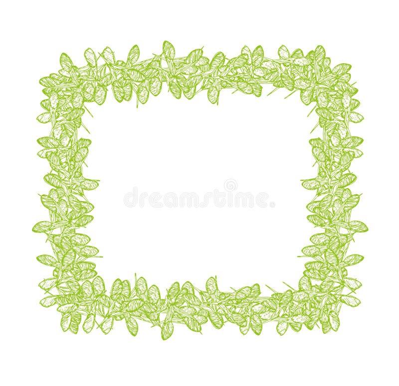 Het vierkante groene kader van klaverzaden vector illustratie