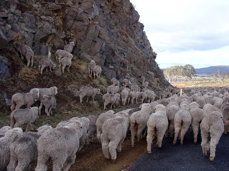Het vinden van de Manier, Tasmanige, Australië stock afbeeldingen