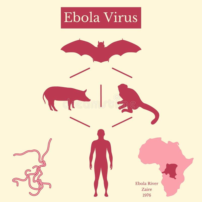 Het virus van Ebola Infographicsbron van ziekte royalty-vrije illustratie