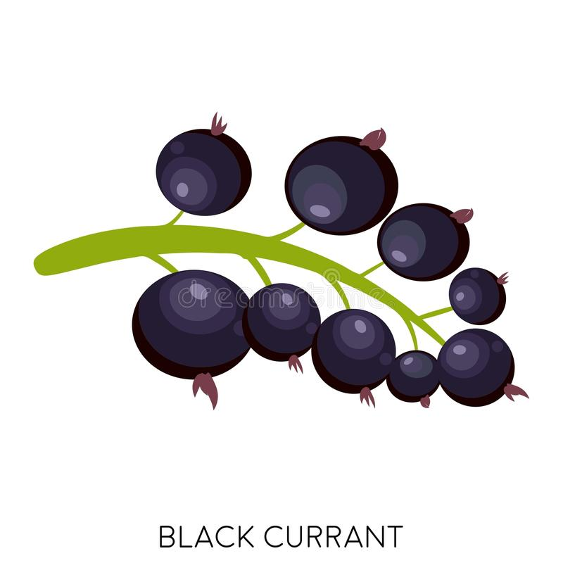 Het vlakke die pictogram van de zwarte besbes op witte achtergrond wordt geïsoleerd Zoet fruit Voedsel van de Eco het heerlijke z vector illustratie