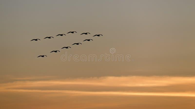 Het vliegen bij zonsondergang stock foto