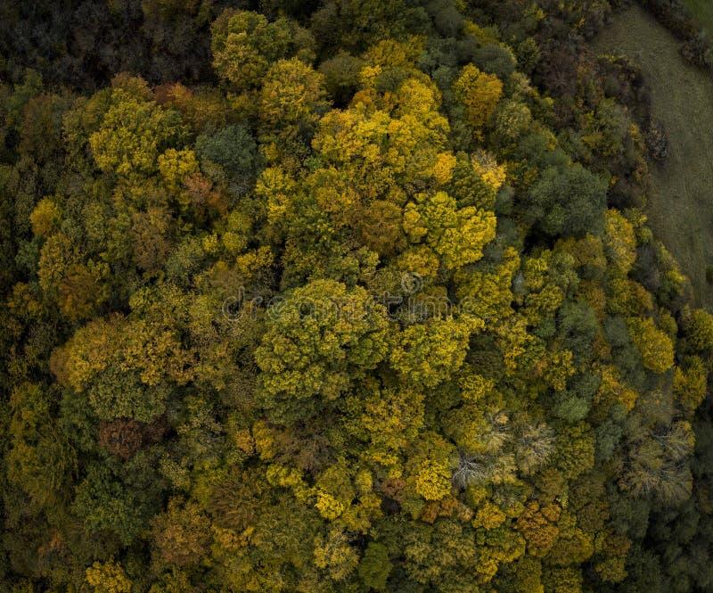 Het vliegen boven de kleurrijke treetops herfstbomen bosfrankrijk stock fotografie