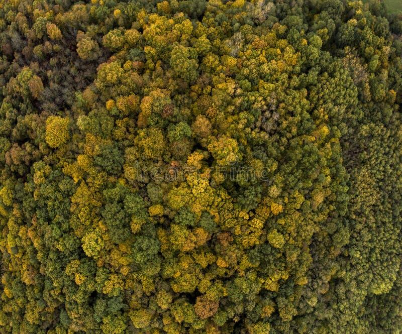 Het vliegen boven de kleurrijke treetops herfstbomen bosfrankrijk royalty-vrije stock fotografie