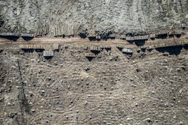 Het vliegen boven vreselijk ontbossingsbos voor het oogsten royalty-vrije stock afbeeldingen