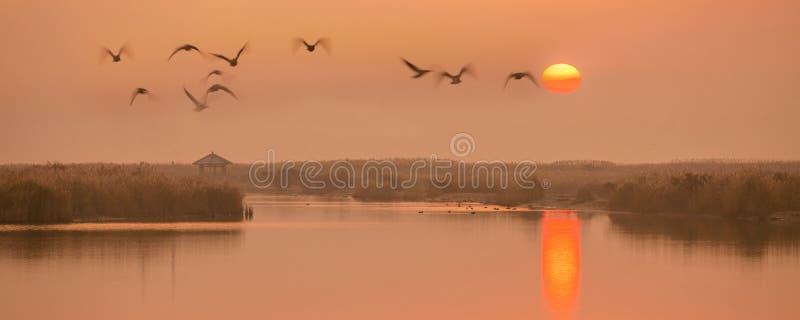 Het vliegen in de zonsondergang stock afbeelding