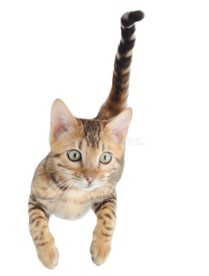 Het vliegen of het springen katjeskat stock afbeelding