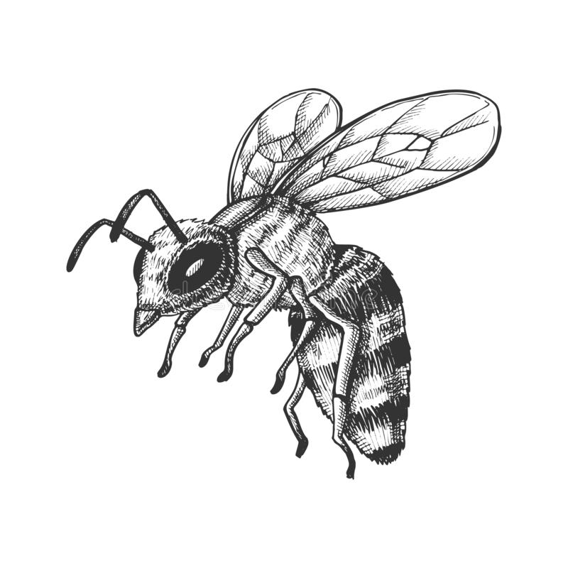 Het vliegen Honey Bee Insect Gathering Nectar Vector royalty-vrije illustratie