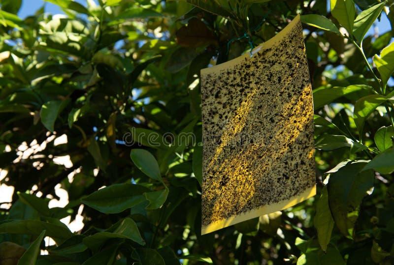 Het vliegen insectval het hangen op een boom stock afbeeldingen