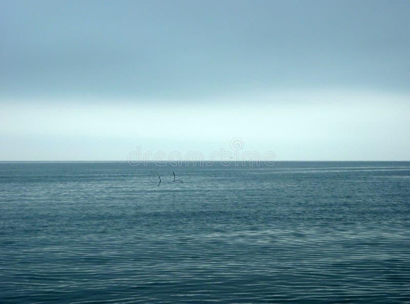 Het vliegen over de zeemeeuwen royalty-vrije stock foto