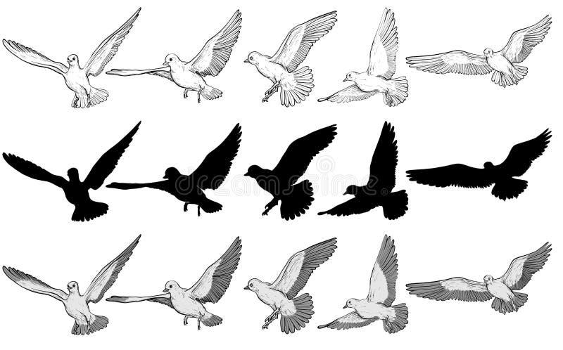 Het vliegen reeks van de duiven de Vectorillustratie Rebecca 36 royalty-vrije illustratie