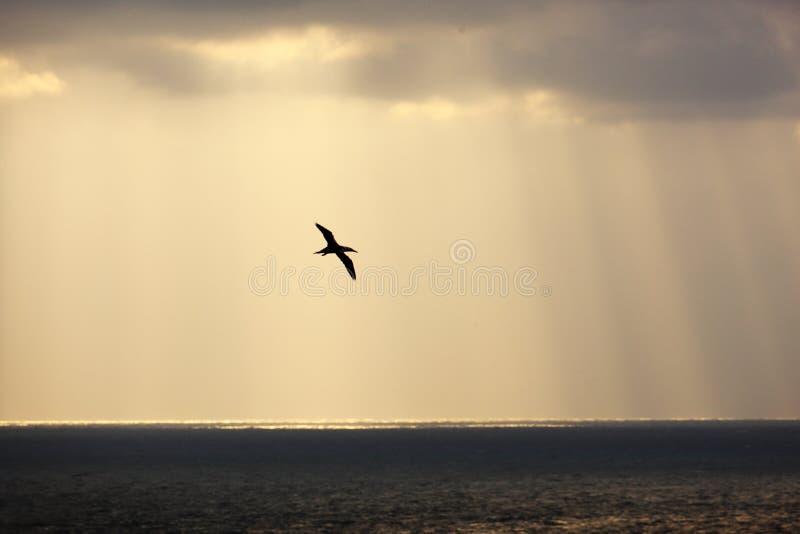 Het vliegen in stralen royalty-vrije stock foto