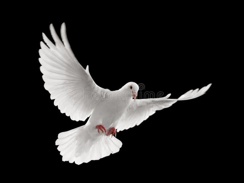 Het vliegen van de duif