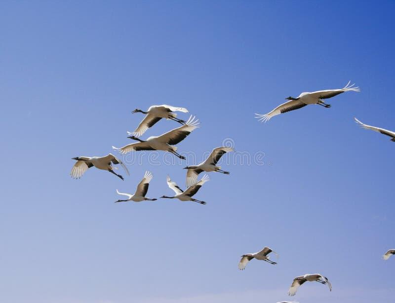 Het vliegen van de vogel royalty-vrije stock foto