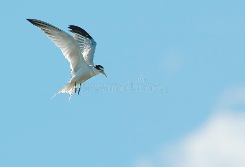 Het vliegen van de vogel stock afbeeldingen