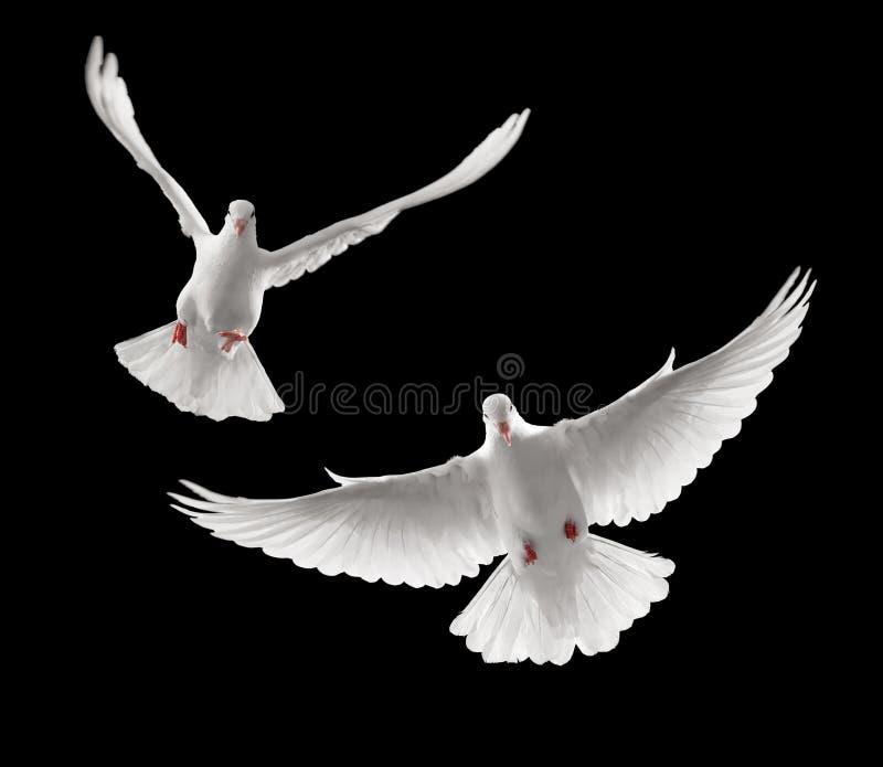 Het vliegen van duiven royalty-vrije stock foto's