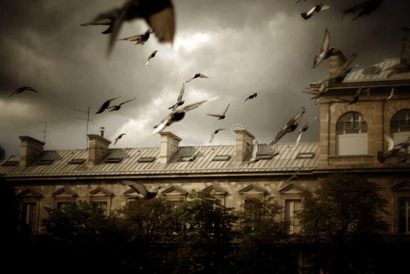 Het Vliegen van duiven stock fotografie