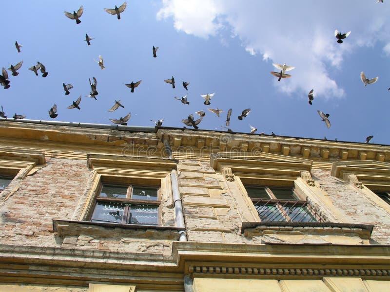 Het vliegen van duiven royalty-vrije stock afbeeldingen