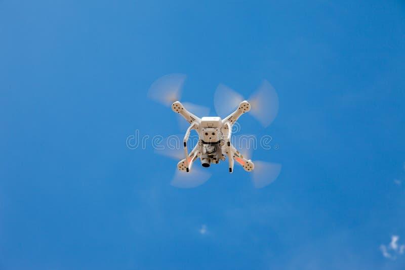 Het vliegen van een hommel op een zonnige dag stock afbeeldingen