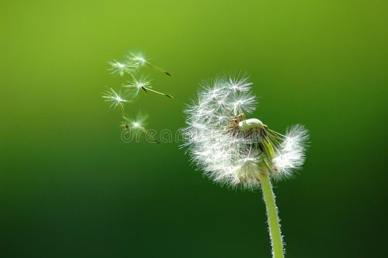 Het vliegen van zaad