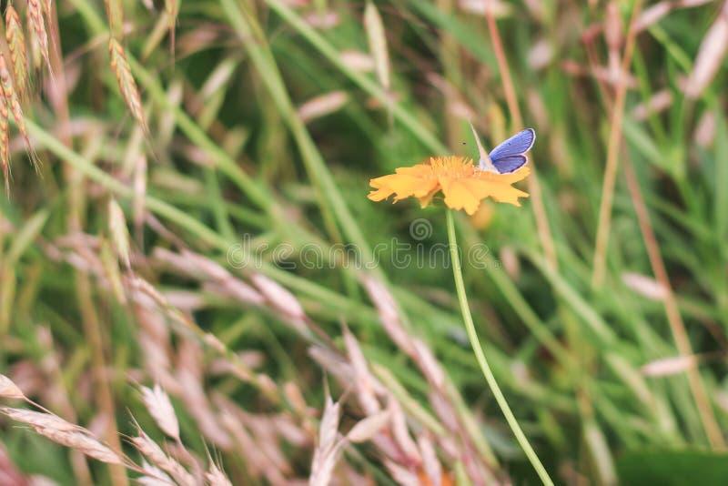 Het vlinderleven royalty-vrije stock afbeeldingen