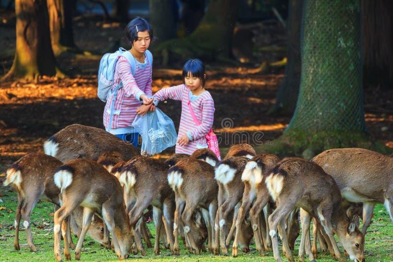 Het voeden Sika deers in Nara Park, Japan stock afbeelding