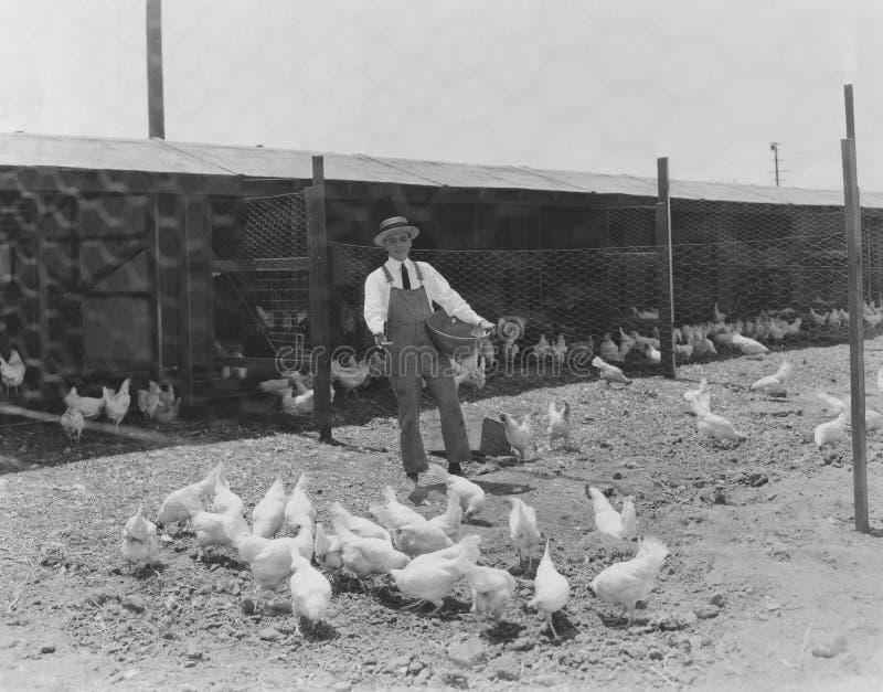 Het voeden tijd bij de kippenren stock foto