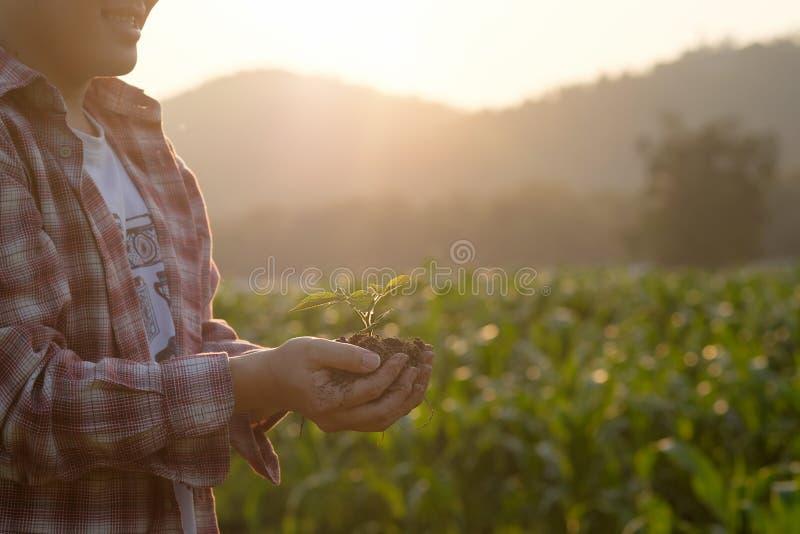Het voeden van babyinstallatie op het concept van de handlandbouw royalty-vrije stock foto's