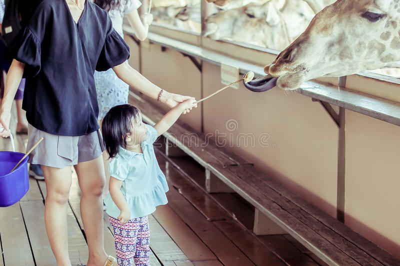 Het voeden van de Giraf royalty-vrije stock foto