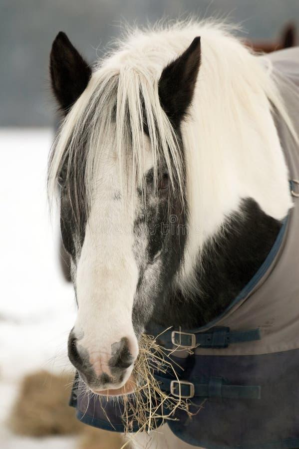 Het voeden van de poney royalty-vrije stock foto
