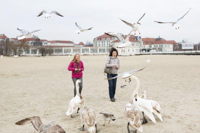 Het voeden van de vogels stock afbeelding