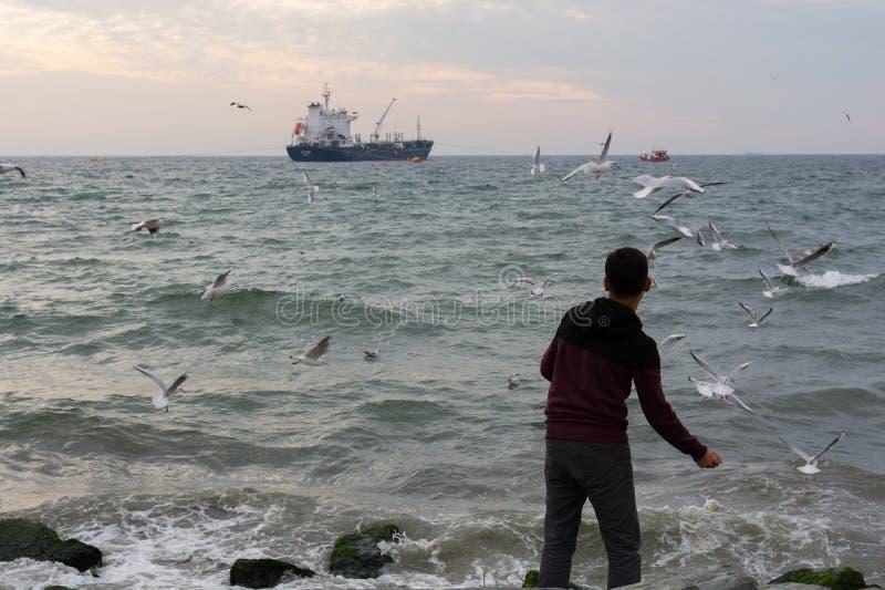 Download Het Voeden Van De Zeemeeuwen Redactionele Stock Foto - Afbeelding bestaande uit voedsel, horizon: 107702478