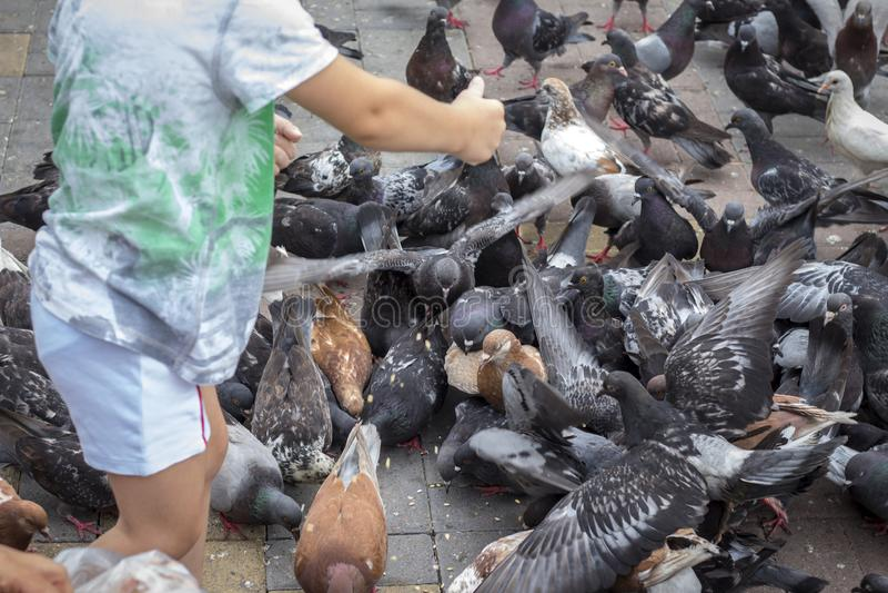 Het voeden van duivenzaden van kinderen` s handen royalty-vrije stock fotografie