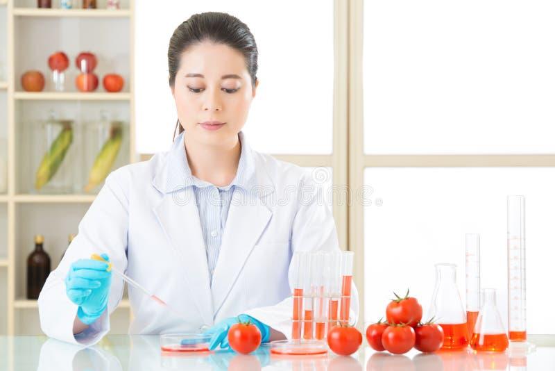 Het voedselonderzoeksbehoefte van de tomatengenetische modificatie meer test stock afbeelding