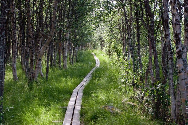 Het voetpad van Kungsleden met Houten Planken stock foto